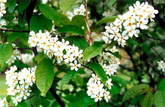 Поллиноз - аллергия на пыльцу